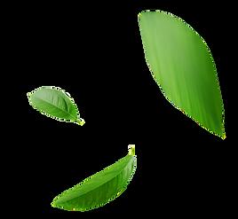 Folhas Contato EcoValor Consultoria em Sustentabilidade