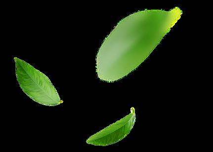 Folhas Equipe EcoValor Consultoria em Sustentabilidade