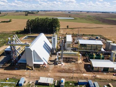 Usinas no RS vão gerar energia com a casca do arroz
