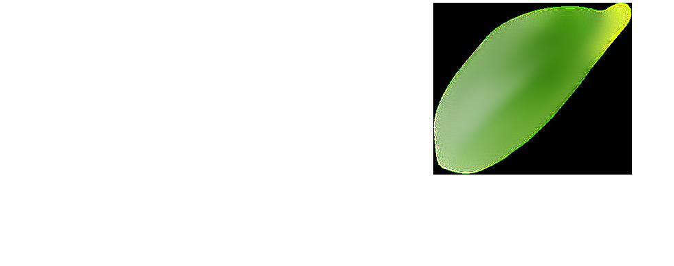 Folhas Quem somos EcoValor Consultoria em Sustentabilidade