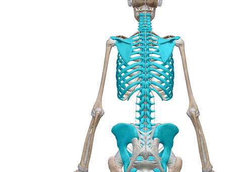 あらゆる身体の不調の問題はここにある!骨盤・背骨・肩甲骨・肋骨の土台となる箇所をケアすれば効果的に身体はよくなる