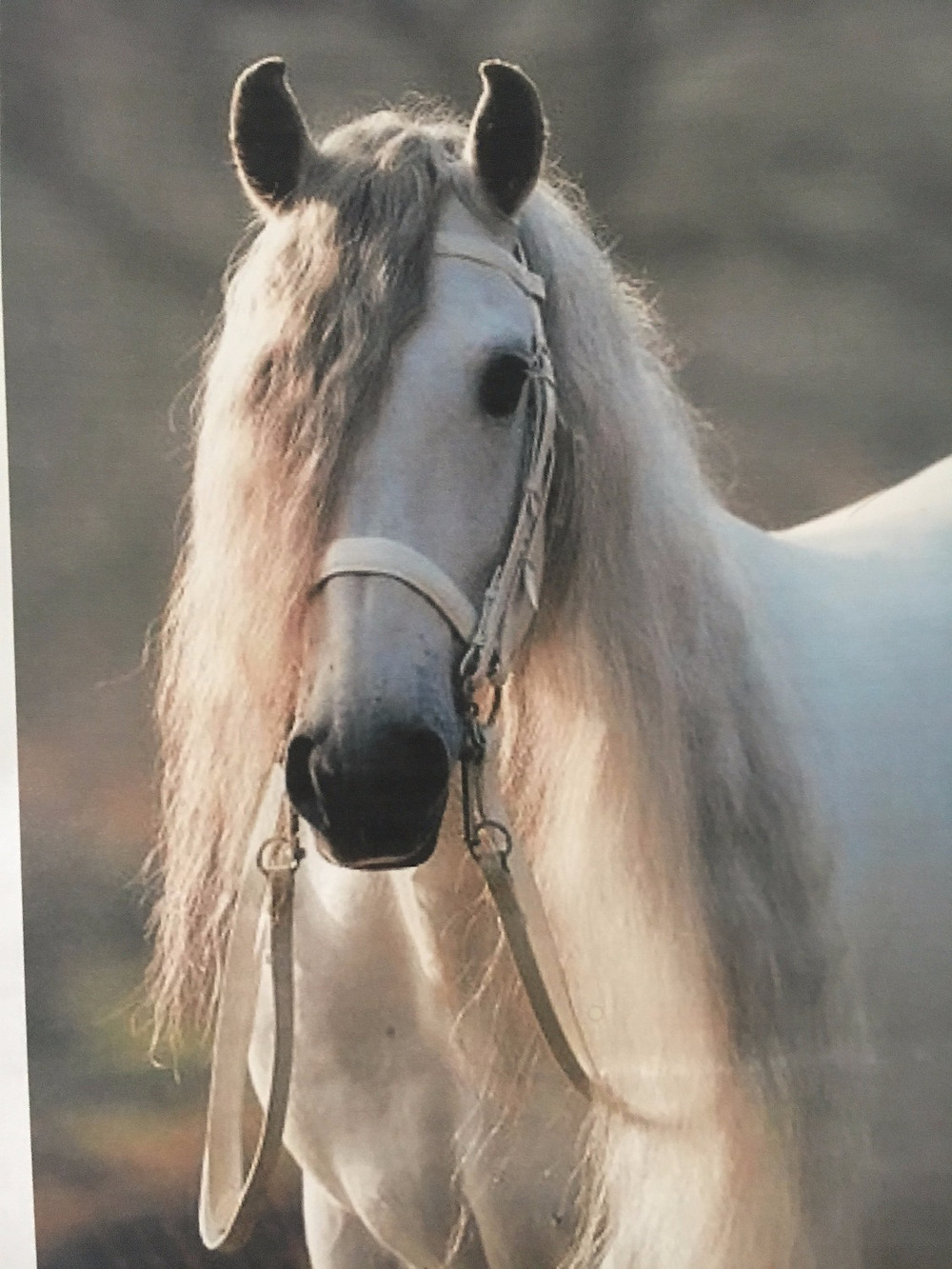 Photo of horse from internet.