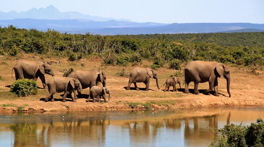7-elephants-walking-beside-body-of-water