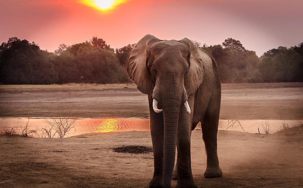 wildlife-photography-of-elephant-during-