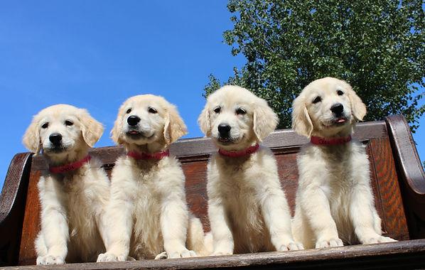 Gillan Skittles Pups 9-14-2021 Females Lizzie-Shelby-Nellie-Cece Photo-Cropped.jpg