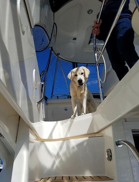 Golen on Boat Photo-2.jpg
