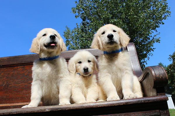 Gillan Skittles Pups 9-14-2021 Males Spencer-Alfie-Finn Photo-4.JPG