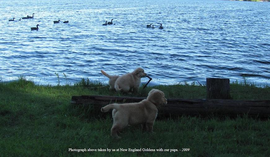 Pups on Lake 2009.jpg