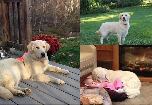 3-photo collage.jpg