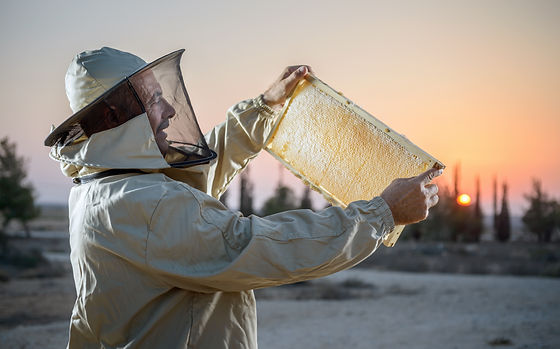 הדרכות וסיורי דבש בית הדבש קדש ברנע