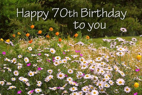 70th Birthday, Daisies at Rhosywir