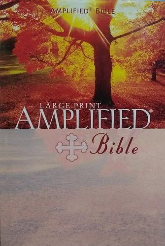 LargeAmplified Bible hardback