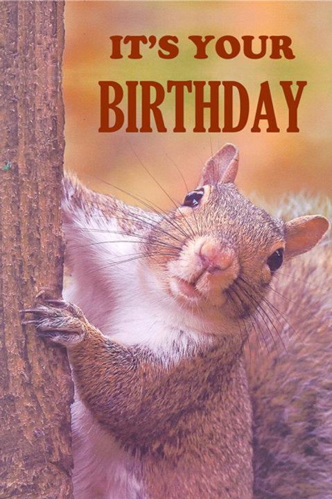 Brian Squirrel Birthday