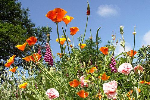 Summer Flowers, Bryn Coch, Arthog
