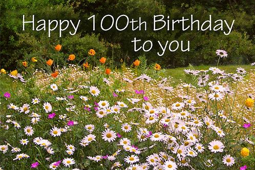 100th Birthday, Daisies at Rhosywir