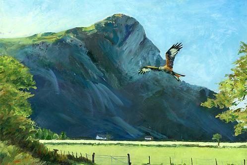 Red Kite at Bird Rock