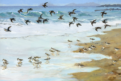 Tywyn Beach with Ringed Plovers