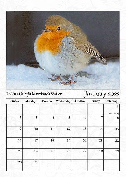January 2022 Robin at Morfa.jpg