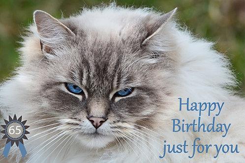 Tywyn Cat 65th Birthday