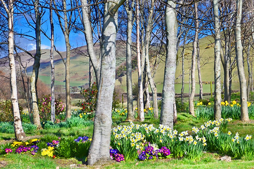 Spring Day, Hendy, Tywyn