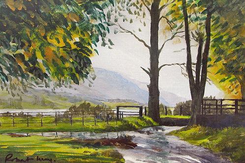 Summer at Afon Cadair