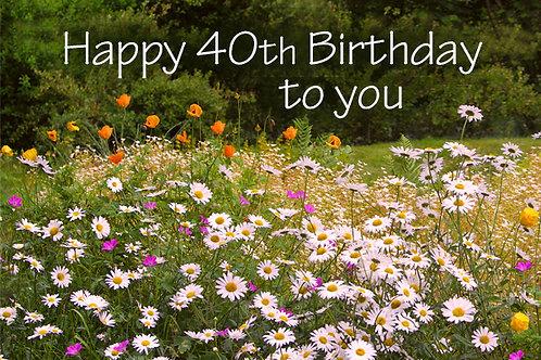 copy of 40th Birthday, Daisies at Rhosywir