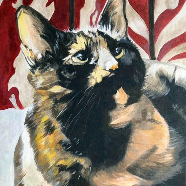 cat 2.jpg
