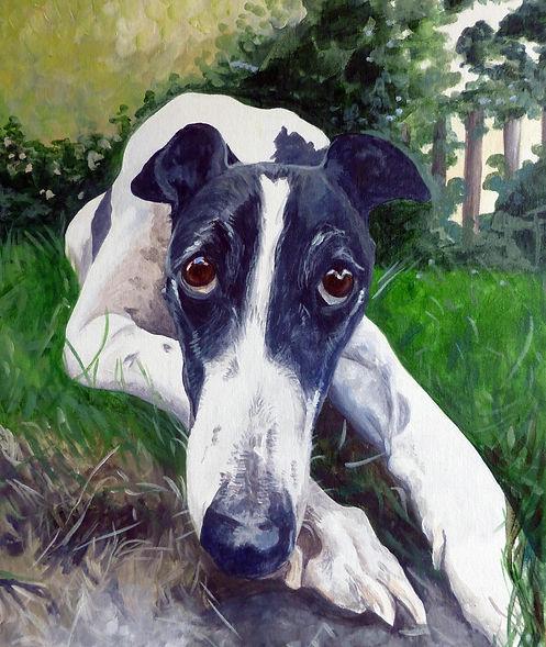 greyhound Febo.jpg