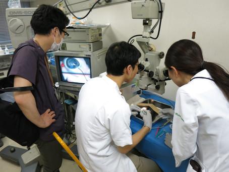 顕微鏡下白内障ウエットラボ実習を行いました。