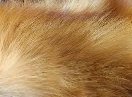 Fur Sale - April 4th 2020