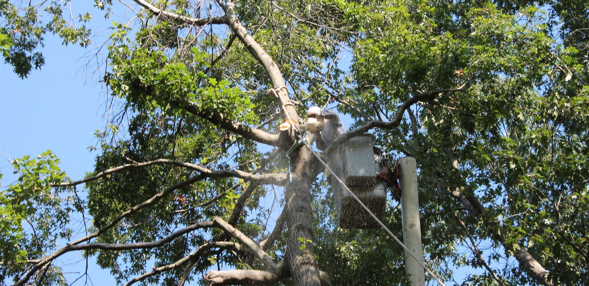 tree_work-_new.jpg