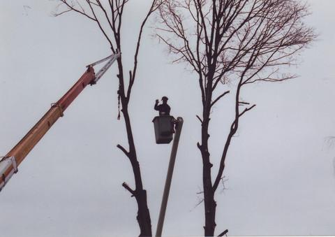 tree_work4.jpg