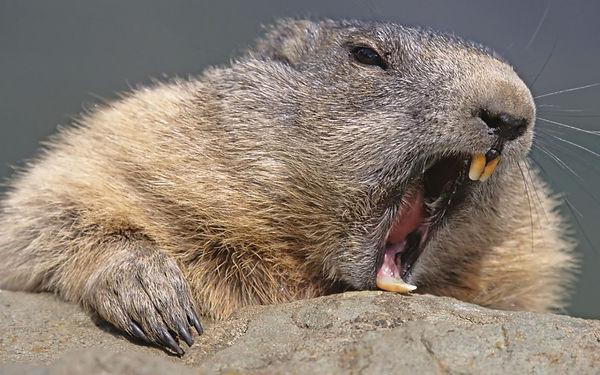 Beaver nuisance.jpg