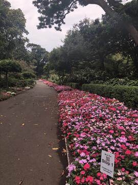 Sydney Royal Botanic Garden– January 16, 2020