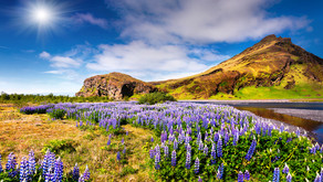 Top 10 Things to Do in Iceland in June