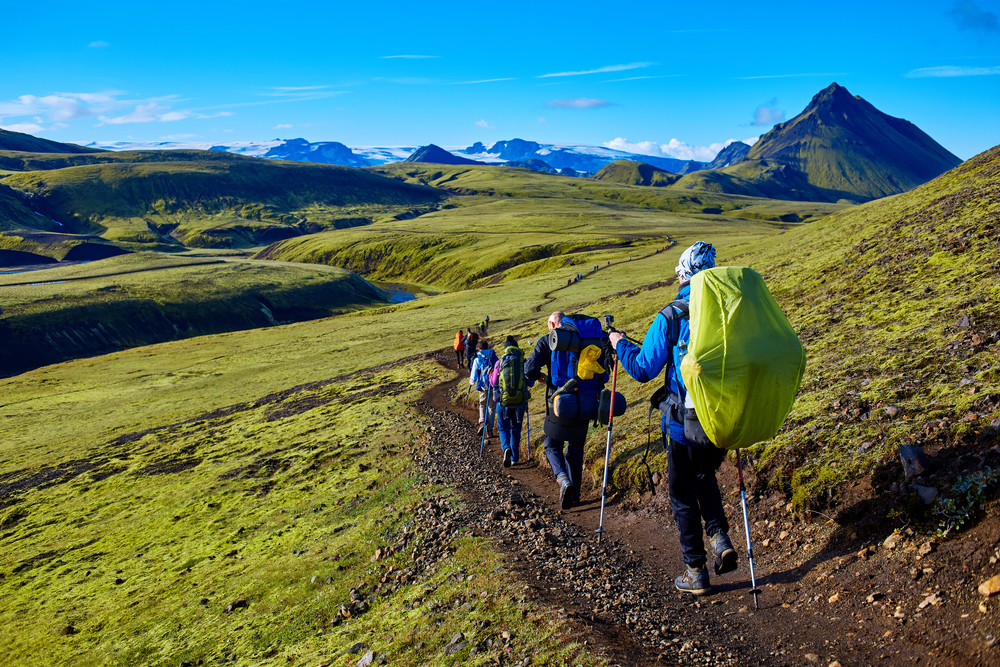 A group of walkers heading off down a mountain path under blue skies. Green landscape for hiking in Iceland.