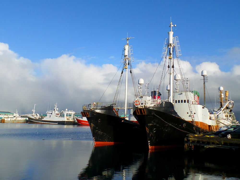 Two large vessels in the foreground and others behind. Reykjavik Old Harbor