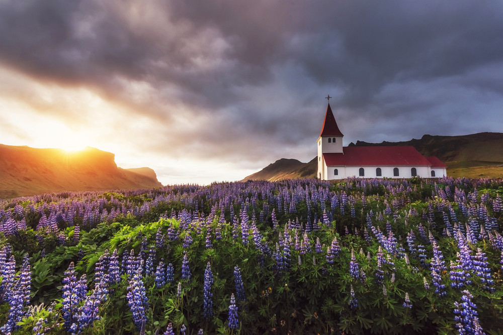Purple lupins in the foreground and sunset skies. A picturesque white and red church in the distance. This is one for the most photographed churches in Iceland.