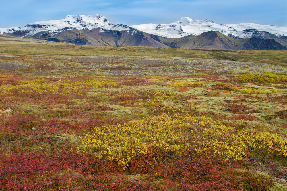 Fall colours over grassy landscape with snowy mountains in distance. Iceland in October.