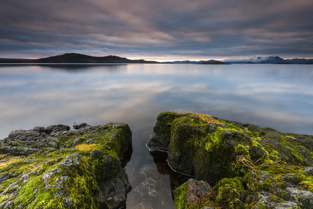 A large lake with the sky reflected in glassy waters. Mossy rocks in the foreground. This is Thingvellir lake in one of the national parks of Iceland.