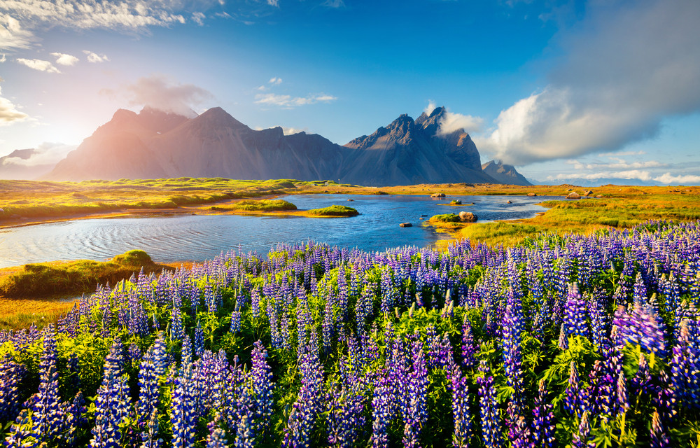 Summer landscape of lakes, mountains and purple lupins under blue skies.