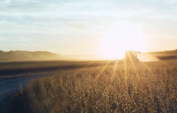Cicada Combine Sunrise.jpeg