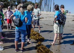 The Giant Kelp Lesson