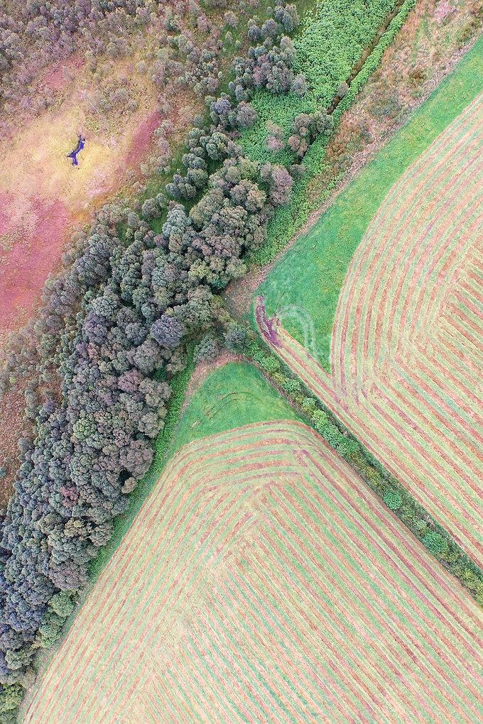 field crop edit.jpg