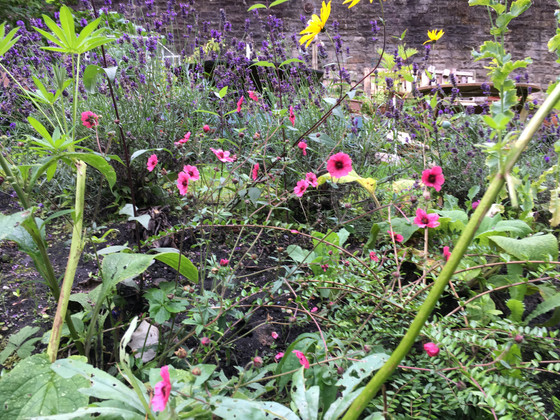 Doors Open Day at West Port Garden, 29-30th September