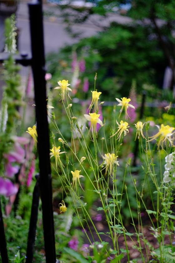 Gardens Open Day - 2nd June