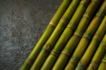 Sugarcane Comp.jpg