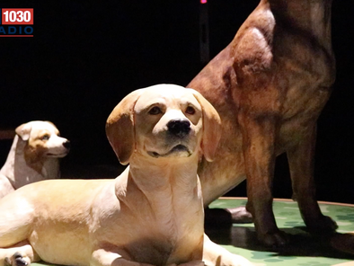 'Dogs! A Science Tail' exhibition opens at Museum of Science