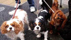 Boulevard libera entrada de cães e gatos