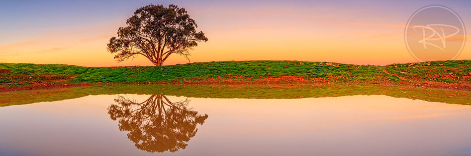 Tree Dam